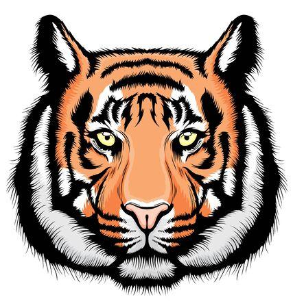 Illustration of Tiger, wild big cat head.