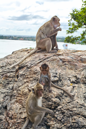 Monkey on the car is eating Thailand Stock Photo