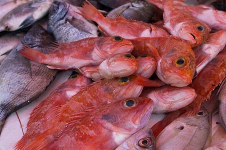 Fresh fish on the fish market in Morocco in Essaouira