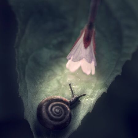 A snail on a leaf under a luminous flower on a dark background. Banco de Imagens