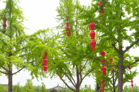 Spring Festival of China. Green trees in the park red lanterns Stock Photo