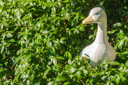 Cute toy garden plaster sculpture of the white duck  for decorating the garden. Duck set among green leaves.