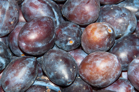 A lot of ripe blue  healthy organic plums. Background of fresh juicy fruit.