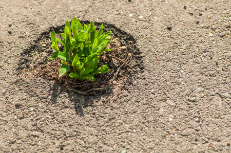 Green Plant Breaks Through The Asphalt. The grass has sprouted through asphalt. Force of nature. Space for text. Sunny day.