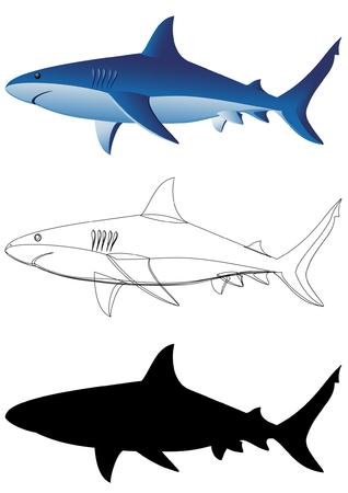 tiburones: Tiburones - 3 im�genes aisladas en blanco Vectores