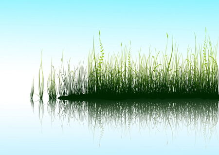 Green grass and blue sky with reflection in water