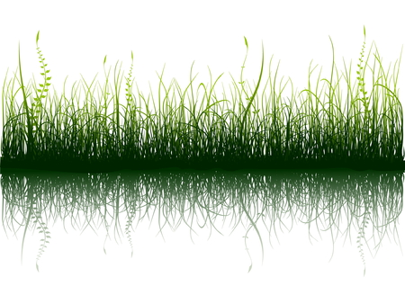 Green grass with reflection isolated on white Illustration