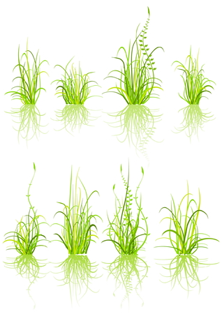 set of grass - isolated on white Stock Vector - 3561103