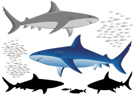 tail fin: Los tiburones y peces - aisladas en blanco