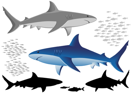 Sharks and fish - isolated on white