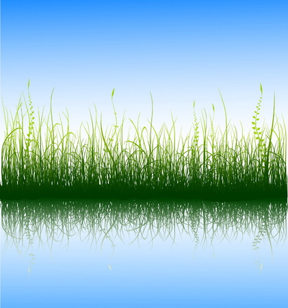 water weed: Green grass and blue sky with reflection in water