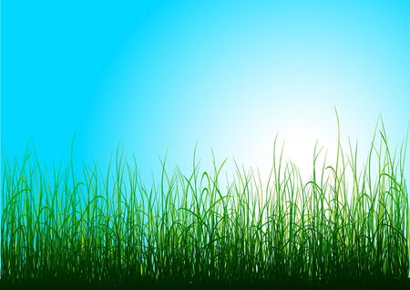 Green grass and blue sky with sun Stock Vector - 4370892