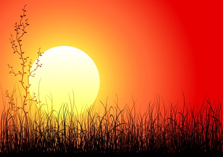 Magic sunset with dark grass and single tree Vector