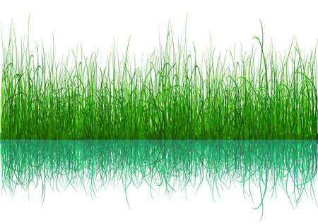 Green grass with reflection isolated on white Stock Vector - 4785307