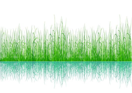 Green grass with reflection isolated on white Stock Vector - 5002167