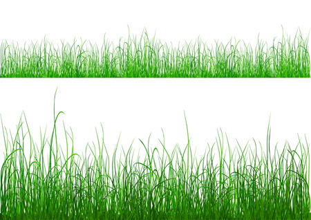 Green grass isolated on white Stock Vector - 5080721
