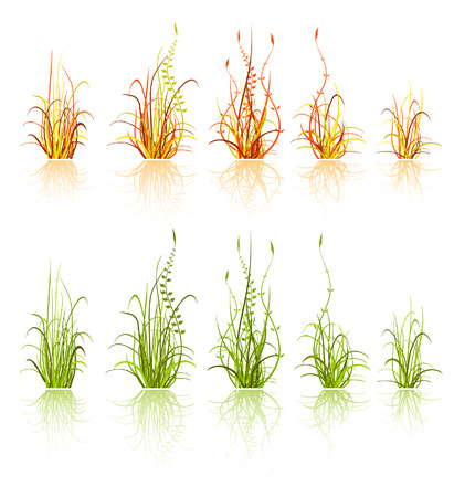 set of design elements - grass isolated on white Vector