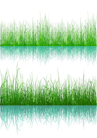 Green grass with reflection isolated on white Vector