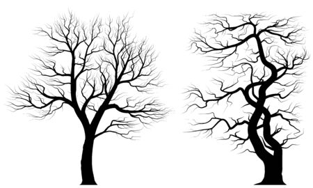 Silhouettes of old huge trees over white background