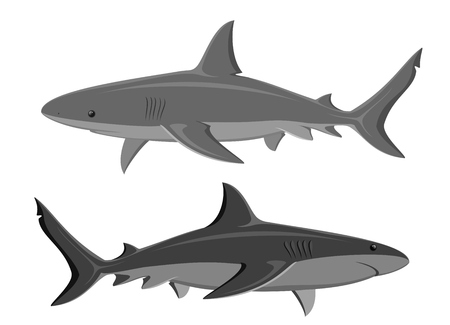 great white: Sharks. Set of two great white sharks isolated on white. Illustration