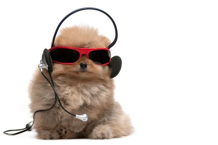 pomeranian: A pomeranian spitz is wearing sunglasses and headphones; isolated on white background