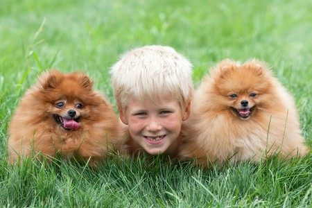 Smiling boy with two dogs are lying on the grass photo