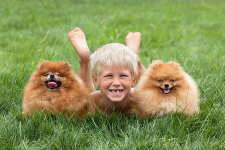 pomeranian: Young boy with two dogs are lying on the grass