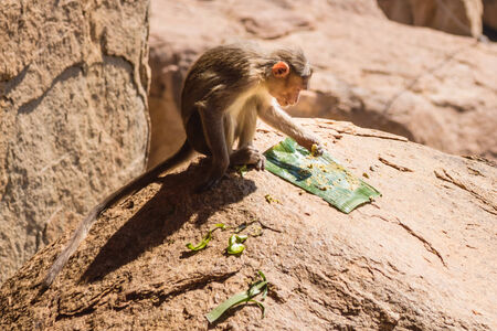 Monkey eating on the rock in mountain photo