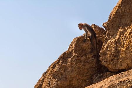 Monkey sitting on the rock in mountain photo