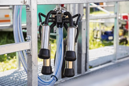 mechanized: Automated mechanized milking equipment closeup for farmland industry