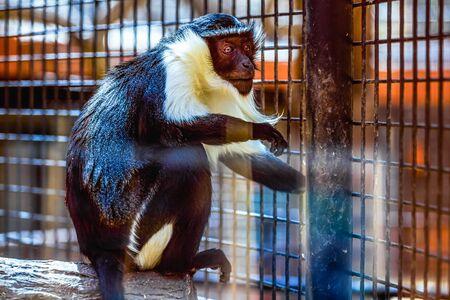 cel: Scimmia che si siede sul ceppo di legno in zoo cel Archivio Fotografico