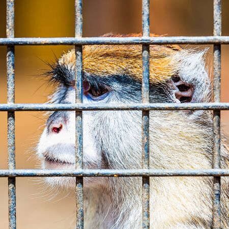 grille: Monkey looking through zoo cell grille