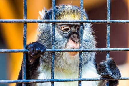 grille': Monkey looking through zoo cell grille