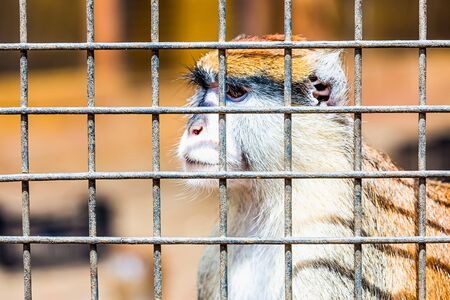 marmoset: Monkey looking through zoo cell grille