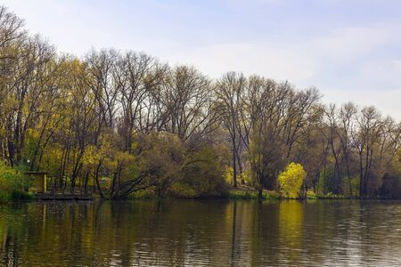 yellow trees: Brown and Yellow Trees on Shore of Lake at Day in Autumn Season