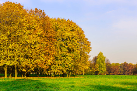 branchy: Branchy Multicolored Trees on Field with Green Grass at Sunny Day in Autumn Season