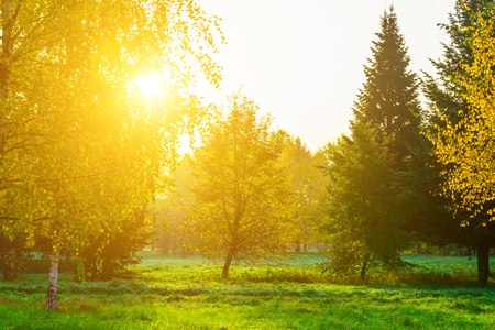 nature backgrounds: Autumn Park with Colorful Trees and the Sun Shining Through the Branches in the Morning