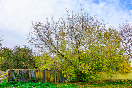 colorful tree: Autumn View on Branchy Colorful Tree with Wooden Fence in the Afternoon Stock Photo