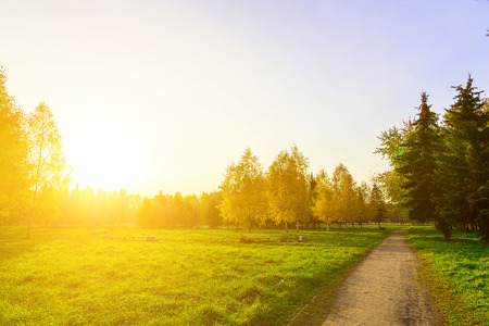 lighted: Autumn Park with Pathway, Colorful Trees on Green Grass Lighted by the Rays of the Sun