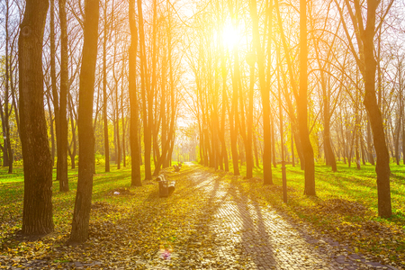lighted: View on Autumn Park Alley with Trees on Green Grass and Road from Brick Covered Dry Foliage Lighted by the Rays of the Sun Stock Photo