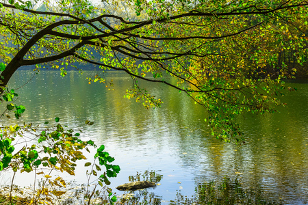water on leaf: Tree Branch with Colorful Leaves  over Lake in Autumn Time