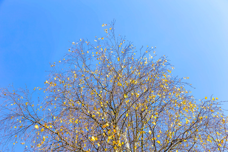 branchy: Branchy Tree Against Sky in Autumn Time