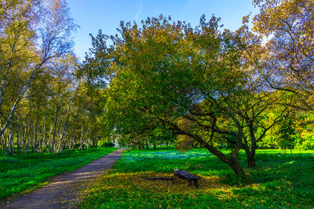 branchy: Autumn Park with Branchy Trees near Bench and Road among Green Grass