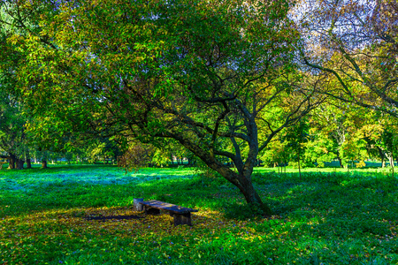 branchy: Wooden Bench under Branchy Tree among Green Grass in Park Stock Photo