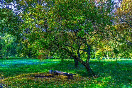 branchy: Branchy Trees with Bench among Green Grass with Fallen Leaves