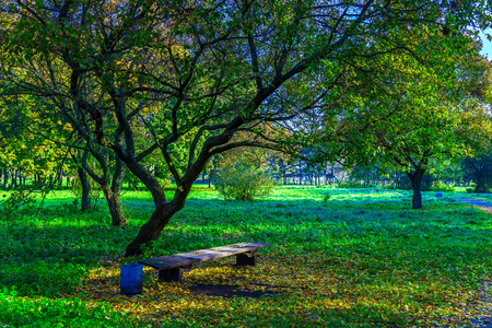 branchy: Branchy Trees with Wooden Bench on Green Grass with Fallen Leaves in Park Stock Photo