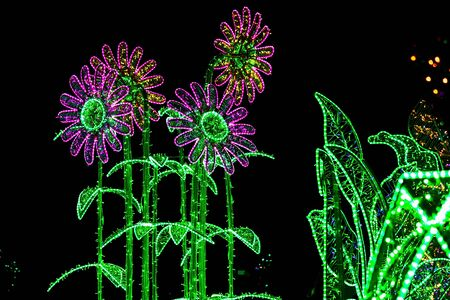 chamomiles: Construction of Flowers Similar to Chamomiles Illuminated from Colorful Lamps