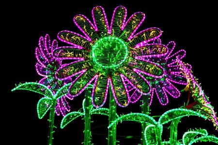 illuminated: Construction of Flowers Similar to Chamomiles Illuminated by Colorful Lamps
