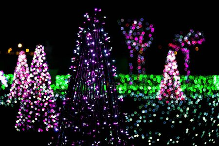 firtrees: Fir-Trees and Grass Illuminated from Christmas Lamps in Garden