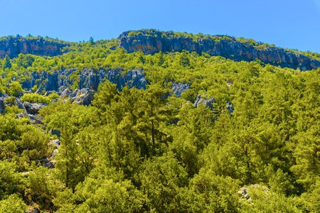View on Green Mountain with Trees in Alanya, Turkey